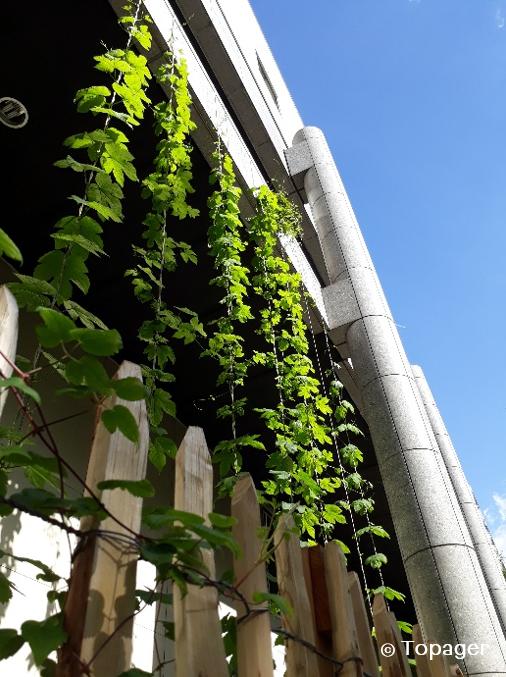 Des hôtels Mercure parisiens créentleurs propres bières 100% locales